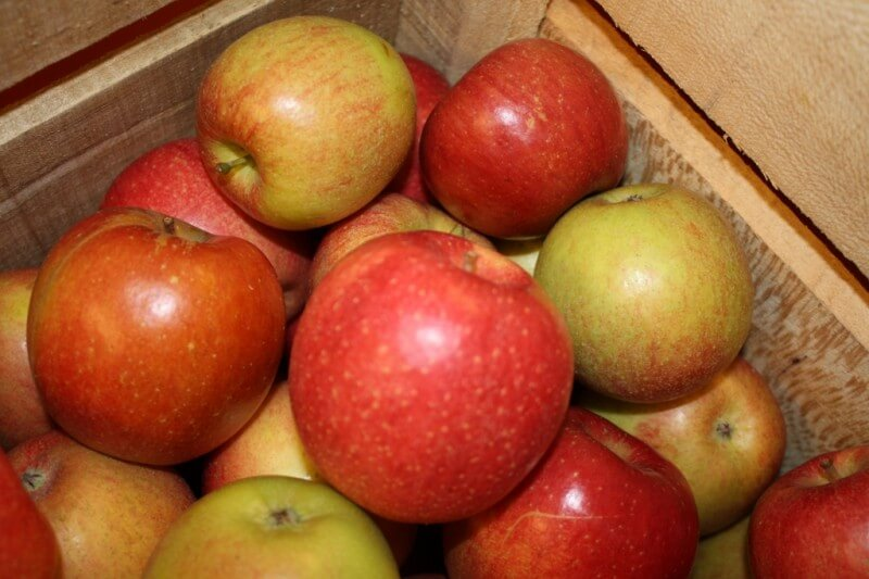 Crisp Braeburn Apple