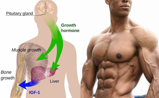 How Does You Body Produces HGH
